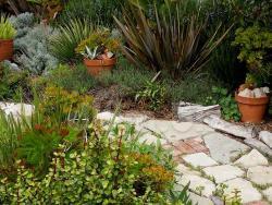 Дорожка из камня с растениями в саду
